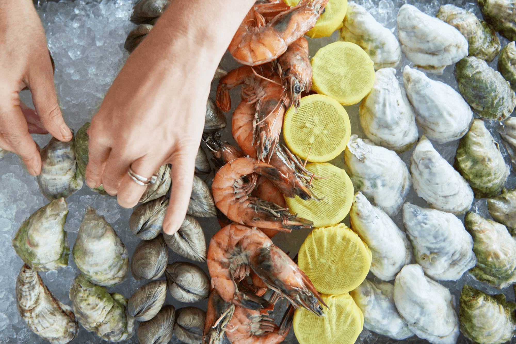 Hands arranging shellfish on ice.